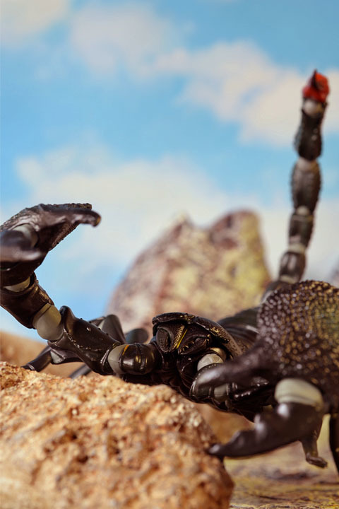 EmperorScorpion020.jpg
