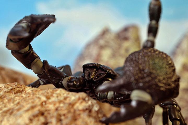 EmperorScorpion023.jpg