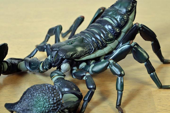 EmperorScorpion029.jpg