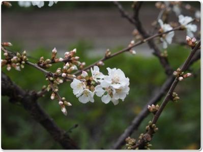 mini_3312_yusura_P3229370.jpg