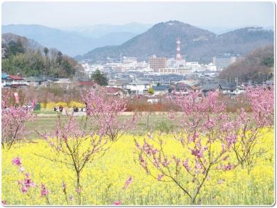 mini_4493_sinobuyama_P4086834.jpg