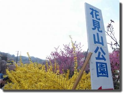 mini_4499_hanami_P4086880.jpg