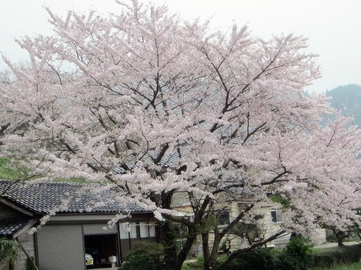 2016 4 田おこし (57)