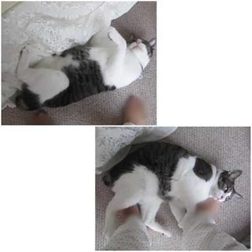 cats_20190315214343484.jpg