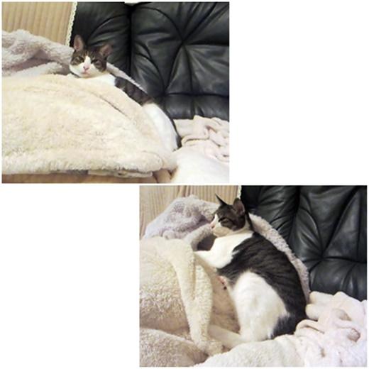 cats_20190415222526fa7.jpg