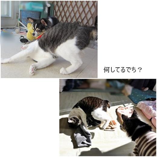 cats_20190426215217f6e.jpg