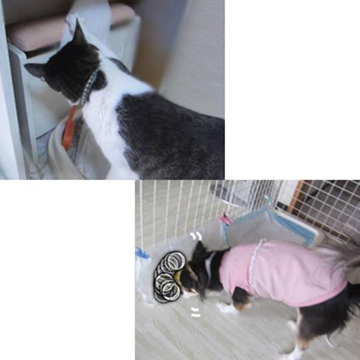 cats_20190531113908102.jpg