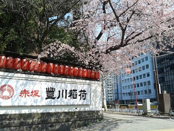 豊川稲荷の桜