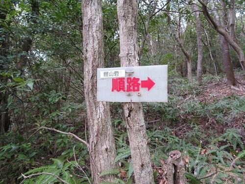 koiyama (2)