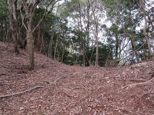 koiyama (8)