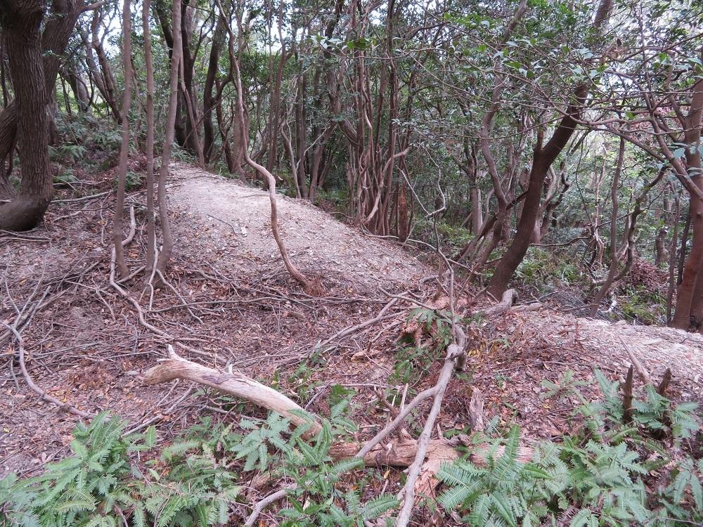 koiyama (3)