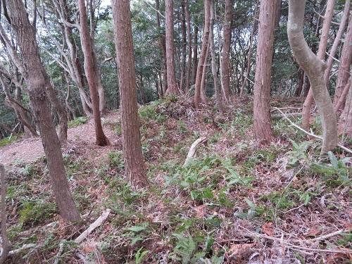 koiyama (5)