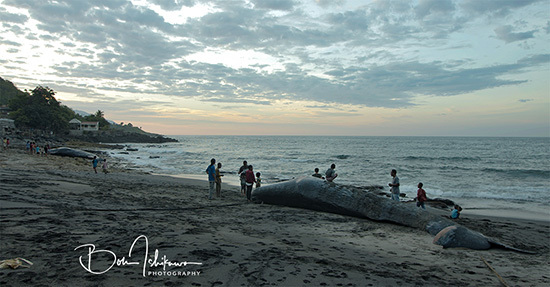 鯨と朝日ブログ用