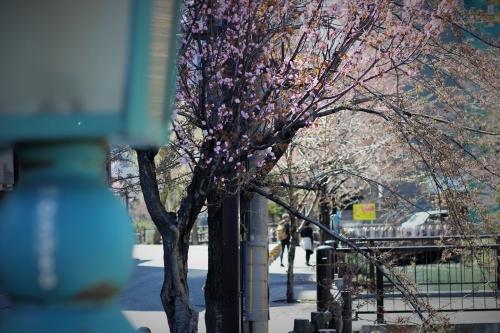 札幌散歩 EOS60D平成31年4月28日 (4)_R