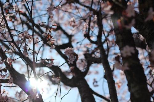 札幌散歩 EOS60D平成31年4月28日 (15)_R