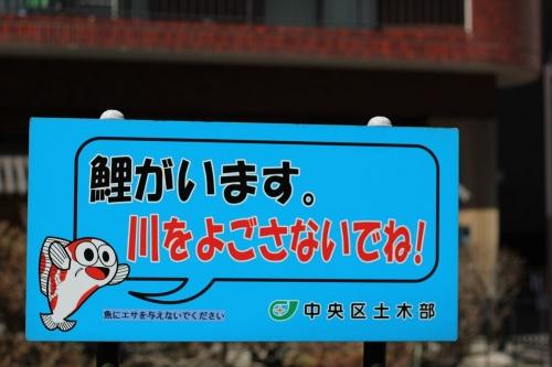 札幌散歩 EOS60D平成31年4月28日 (8)_R