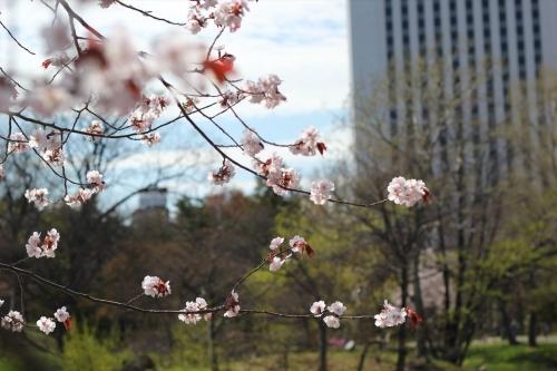 札幌散歩 EOS60D平成31年4月28日 (32)_R