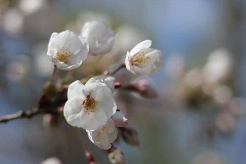 札幌散歩 EOS60D平成31年4月28日 (39)_R