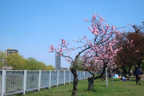 令和元年5月4日琴似発寒河川敷公園 (5)_R