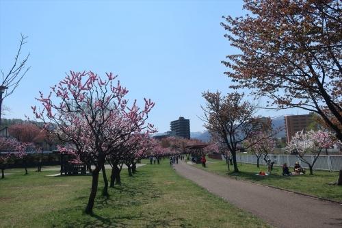 令和元年5月4日琴似発寒河川敷公園 (13)_R