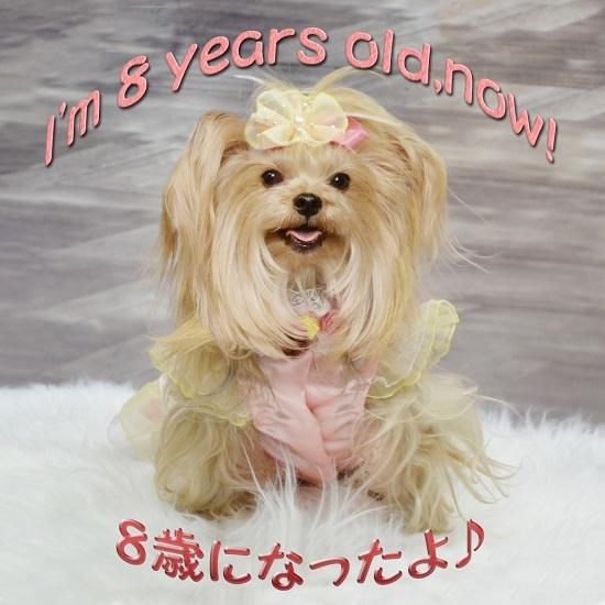 8歳になったよ♪(写真は7歳の誕生日だけど)SS