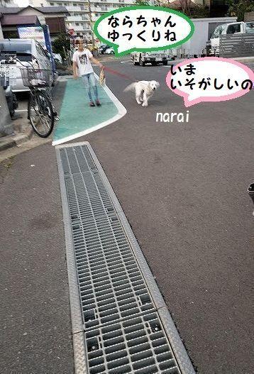 naraityan2.jpg