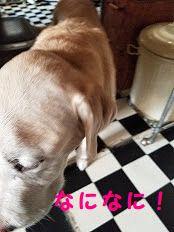 sakura_201903151022205f4.jpg