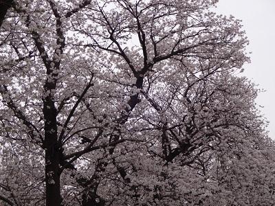 spring198