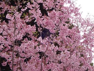spring199