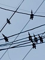 電線スズメ対策詳細1903