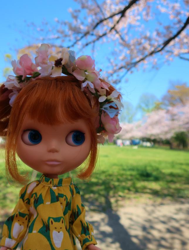 2019今年の桜とユヅ5