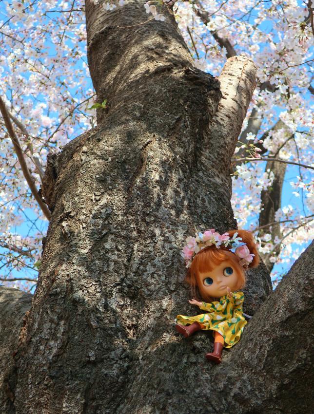2019今年の桜とユヅ8