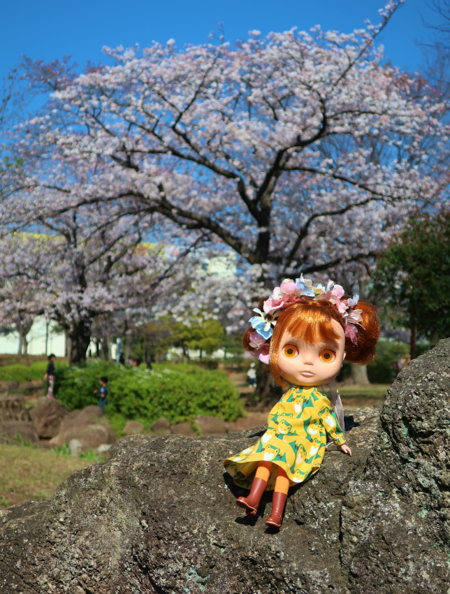 2019今年の桜とユヅ22