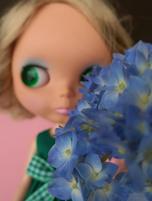 2019紫陽花とハリー&ユヅ23