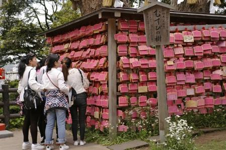 江島神社のむすびの樹