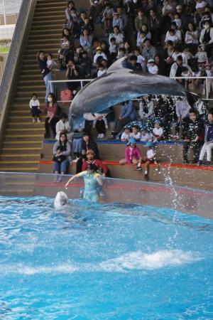 江ノ島水族館のイルカショー