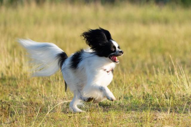 飛行犬-1