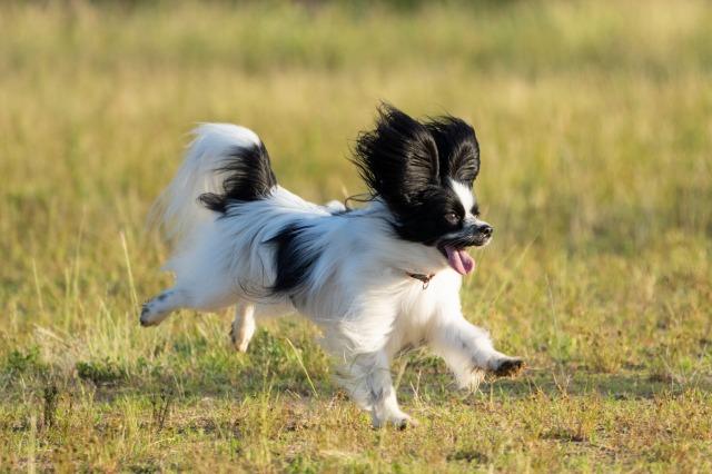 飛行犬-2