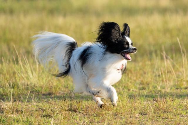 飛行犬-3