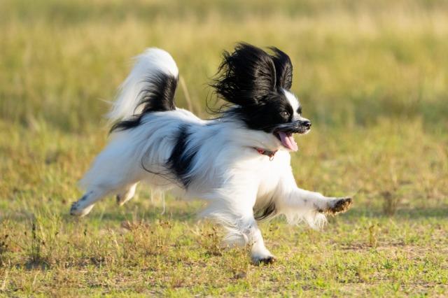 飛行犬-4