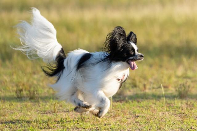 飛行犬-5