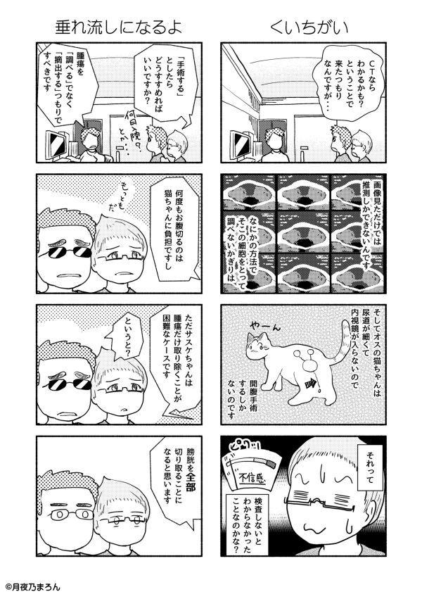12猫本編r