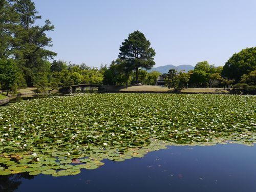 津山 衆楽園 (5)