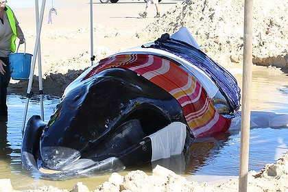 crywhale.jpg