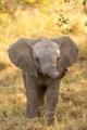 elephantdanbo.jpg