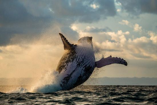 jumpwhale.jpg