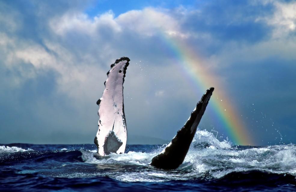 rainbowwhale.jpg