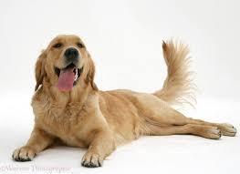waggingtaildog.jpg