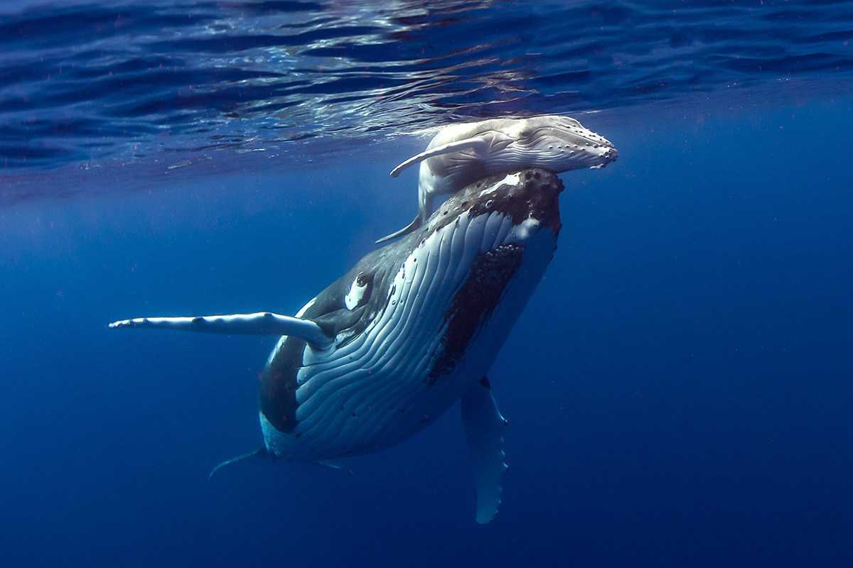 whale-calf-.jpg
