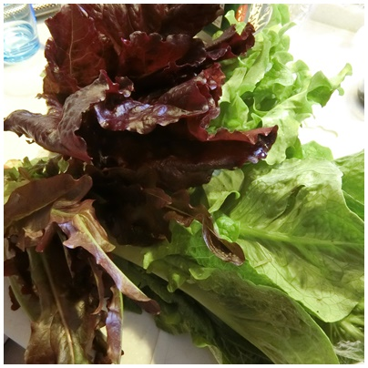 先週(お彼岸前)の春野菜3